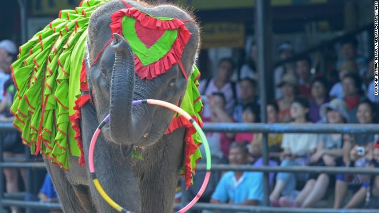 Hành trình bảo tồn voi tại Lào.
