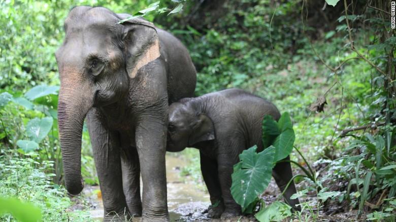 Cuộc sống loài voi ở Mandalao.