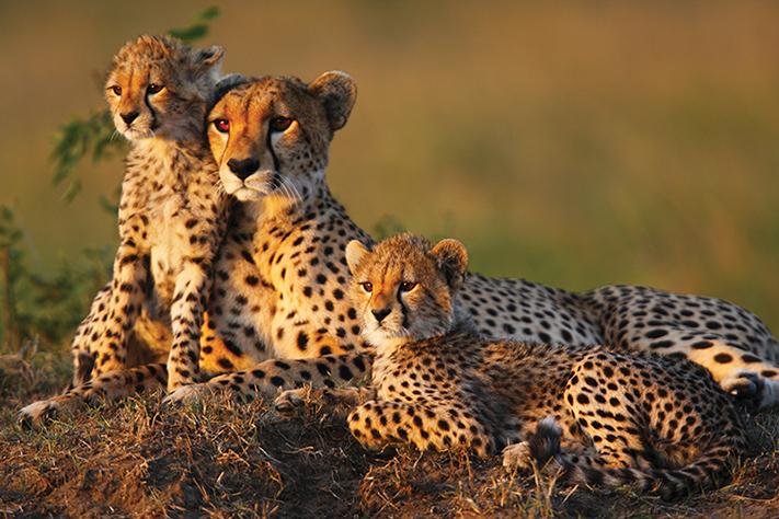 Động vật ở Nam Phi