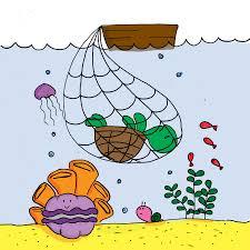 Quần thể loài rùa biển